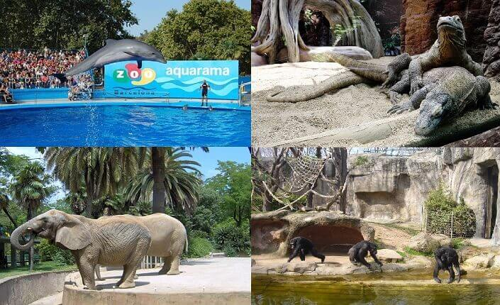Zoo Barcelona Attraction